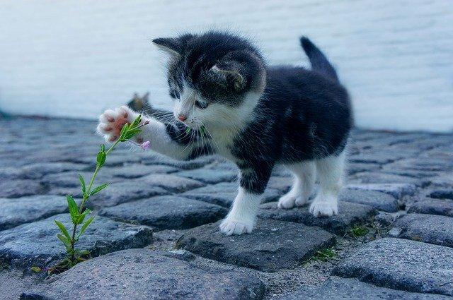 jak nauczyć kotka korzystania z kuwety