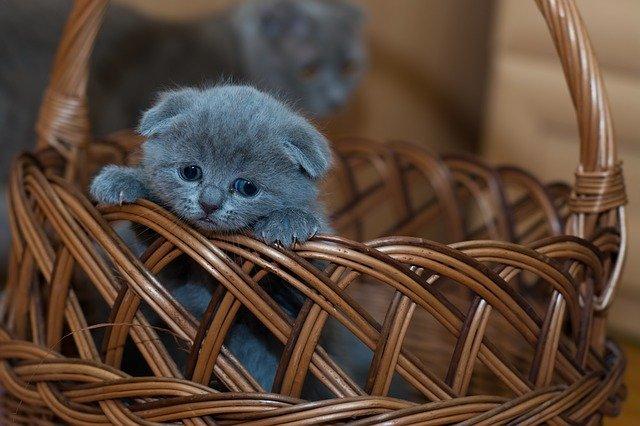 nauka kota